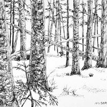 北八ヶ岳 シラビソ小屋周辺 冬の森