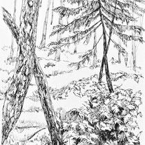 南アルプス南部 シダの森