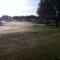Más de las 10 de la mañana y el suelo completamente blanco todavía