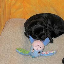 Mein Bruder Abraxas kuschelt sehr gerne mit dem kleinen Esel