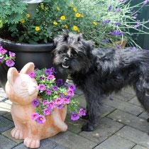 Kleine Blumenfreundin :-)