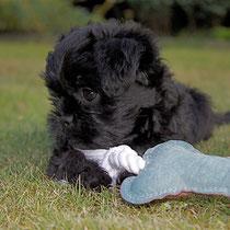 Aurelia with her favourite bone