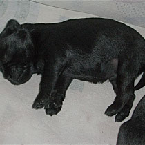 ...and feeling very comfortable :) By the way, that's me, Asterix, at the age of 15 days.