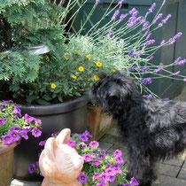 Linni schaut, ob die Blümchen den vielen Regen gut überstanden haben.