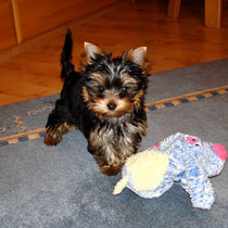 Little Lana at the age of 3 months. When she was a puppy, the cuddly dog was her favourite toy.