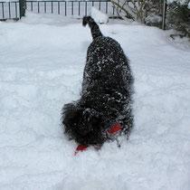 Natürlich durfte Linnis Lieblingsspielzeug - der rote Kong - bei diesem Winterspaß nicht fehlen :-)