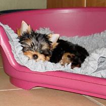 Ein sehr müder kleiner Hund :-)