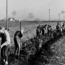 Die Entwässerung und Bearbeitung des Moorbodens brachte Erosionsprobleme mit sich. Unter Mithilfe von Schulklassen wurden Windschutzpflanzungen angelegt, um diese negativen Folgen zu reduzieren.