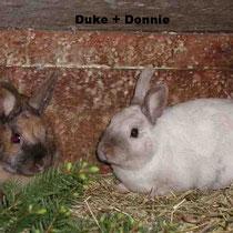 Duke + Donnie