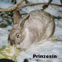 Prinzesin
