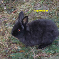 Nightwisch