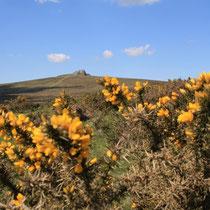 England - Dartmoor