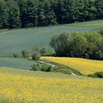 Deutschland - Steigerwald
