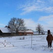 Zeuzleben im Winter 3