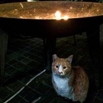 Tolle Alternative zu Heizpilzen in einem Café in Beirut. So gemütlich, dass sich sogar Katzen darunter tummeln.