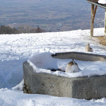 Le bassin octogonal en hiver
