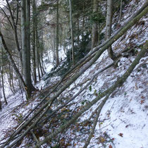 Branches sur le chemin