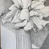Amaryllis Bleistift auf Papier 25x35cm