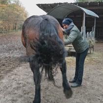 Kastrations-Trauma Pferd lösen