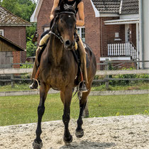 Traumatisierte Pferde ausbilden