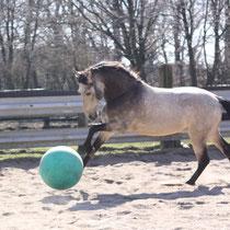Rocco liebt das Ballspielen