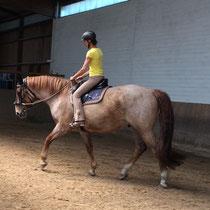 Beritt junges Pferd