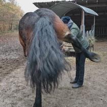 Kastrations-Trauma am Pferd lösen (VPO nach Selina Dörling)
