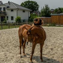 Ausbildung eines traumatisierten Pferdes