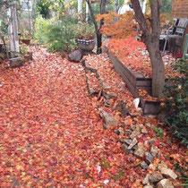 切らない手入れ 秋