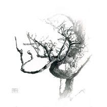 """Bonsái seco / Withered bonsai"" Grafito sobre papel / Graphite on paper. 2013. 31x31cm. Colección particular."