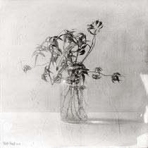 """""""Frasco con planta, nº1 / Glass jar with plant, #1"""". Grafito sobre tabla / Graphite on board. 2019. 40 x 40 cm."""