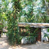 Hostel en la selva