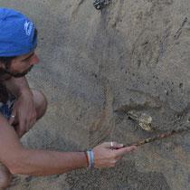 Descubriendo fósiles
