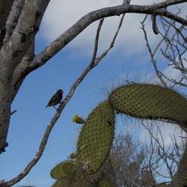 Fauna und Flora der Galápagos Inseln