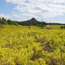 Blütenpracht auf den Galápagos Inseln