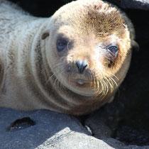 Neugierig auf eine Kreuzfahrt auf den Galápagos Inseln?