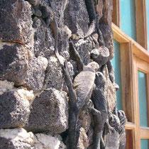 Meeresechsen an einer Hauswand in Puerto Ayora auf den Galápagos Inseln
