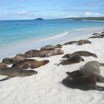 Stransleben auf den Galápagos Inseln