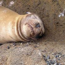 Mittagsschlaf auf den Galápagos Inseln