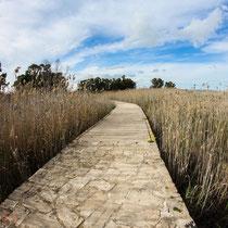 Moorgebiet bei Ávola