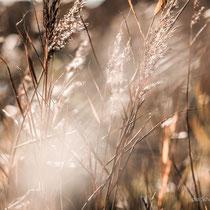 Gräser gab´s überall - sie waren wunderschön.