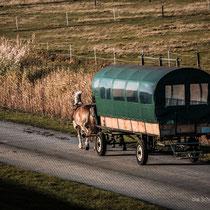 Juist Reiseblog - (c) die Schnappschützen - Inseltaxi, Omnibus, Boten... alles auf Hufen