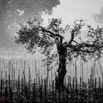 skurile Baumformationen