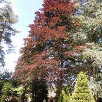 Une partie de l'arboretum - Parc Jane Limousin - Châteauneuf-la-Forêt