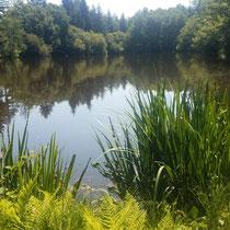 Végétation de l'étang des Rabois - Saint-Denis-des-mûrs  ©PAH Monts et Barrages : E.Gilles
