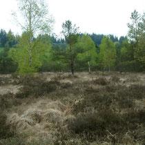 La lande humide de Brénac - Eymoutiers