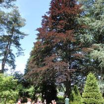 RDV aux jardins - Parc Jane Limousin - Châteauneuf-la-Forêt - Avec les scolaires (jeu de piste dans l'arboretum) - 2012