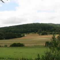 Aujourd'hui, les sommets difficiles pour l'exploitation agricole sont couverts de plantations de résineux, destinés à la production sylvicole - Rempnat