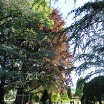 Atelier Parc Jane Limousin à Châteauneuf-la-Forêt : chasse aux arbres dans la partie arboretum