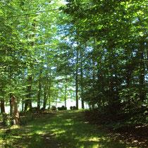 Partie forestière - Jardins de Mas Maury - Le Mas Maury Haut - Rempnat